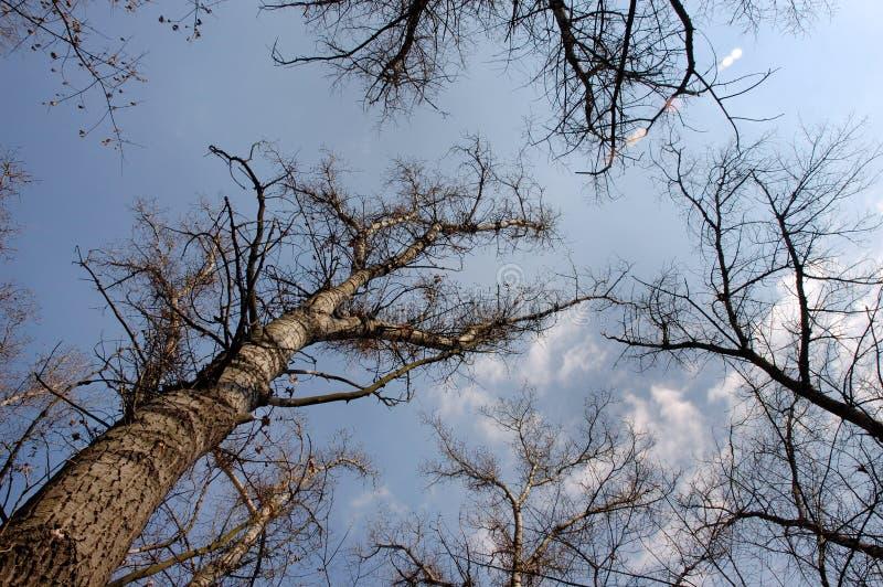 4 trees arkivbilder