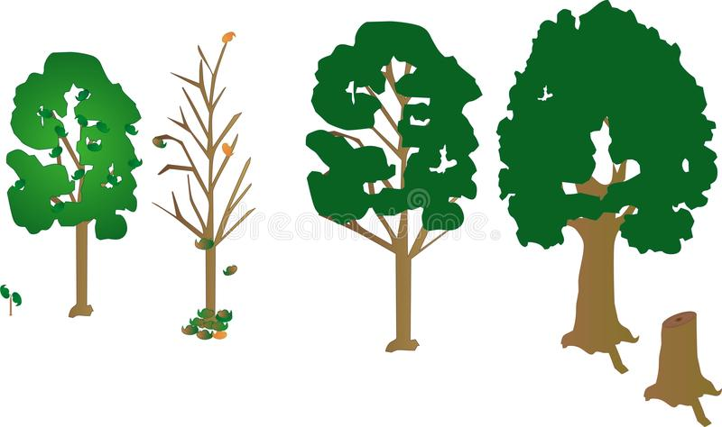 4 trees, a sapling and a dead trunk.. tree growth stock illustration