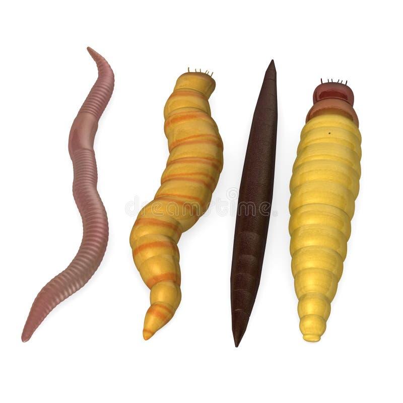 4 wormen royalty-vrije illustratie