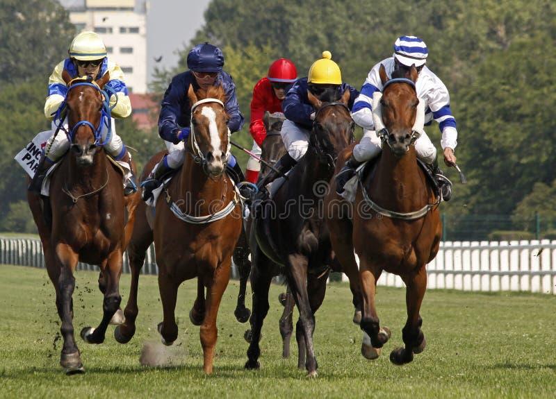 4 wyścigi konne zdjęcie stock