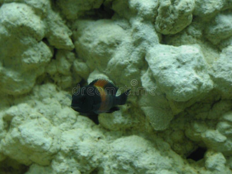 Ψάρια 40 ενυδρείων στοκ εικόνα