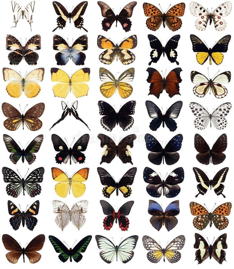 40 fjärilar royaltyfri illustrationer