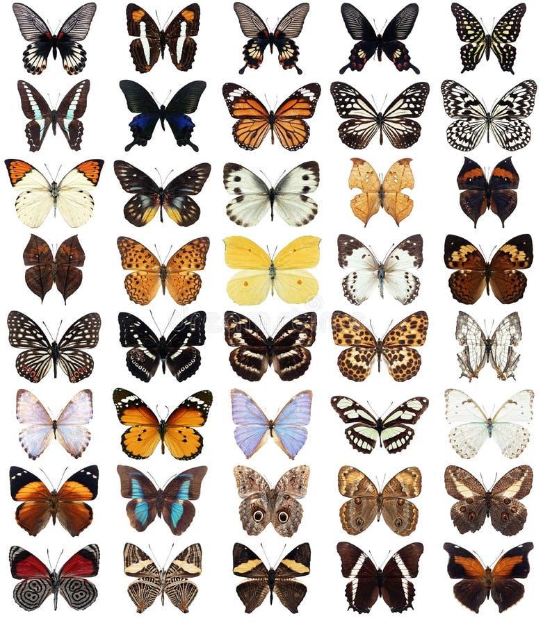 40 fjärilar stock illustrationer