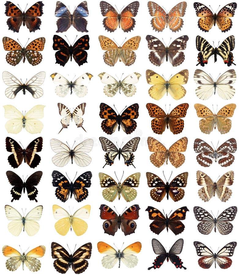 40 fjärilar vektor illustrationer