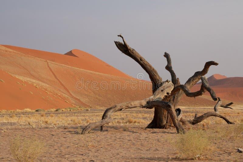 45沙丘 免版税库存照片
