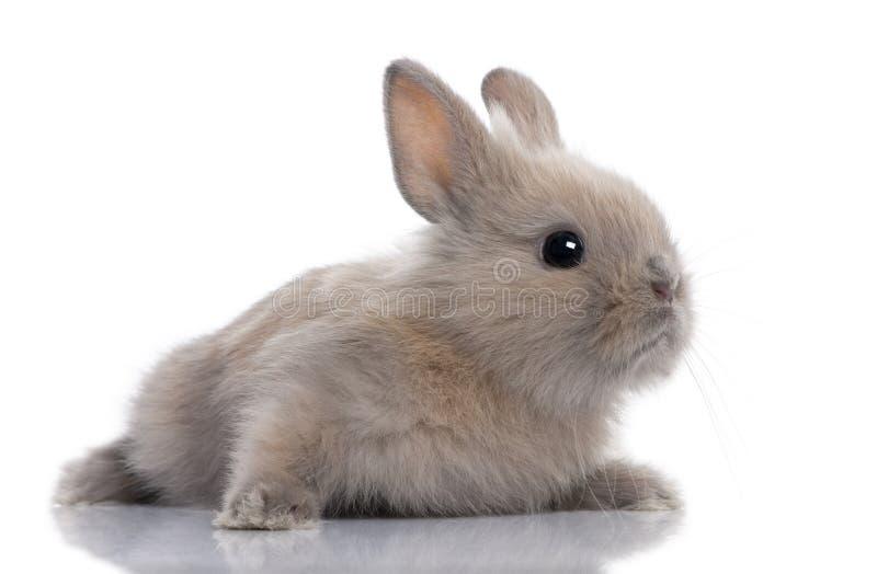 5个婴孩棕色老兔子星期 免版税库存图片