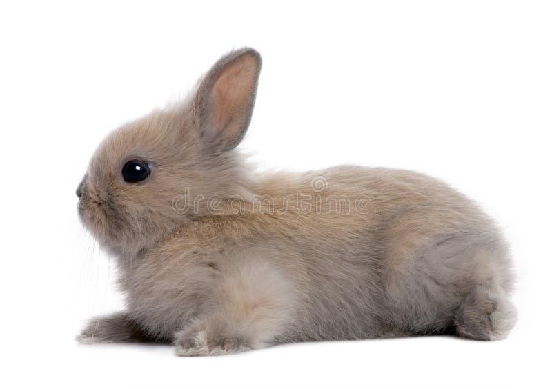 5个婴孩棕色老兔子星期 图库摄影