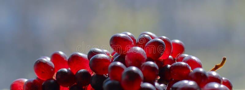 5个葡萄 库存照片