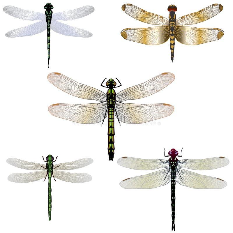 5只蜻蜓 向量例证