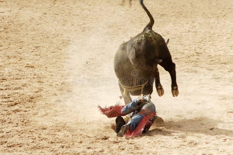 5头公牛骑马 免版税库存图片
