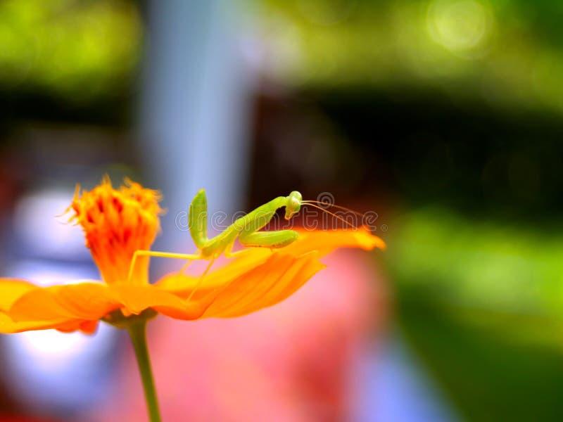 5朵花昆虫 图库摄影