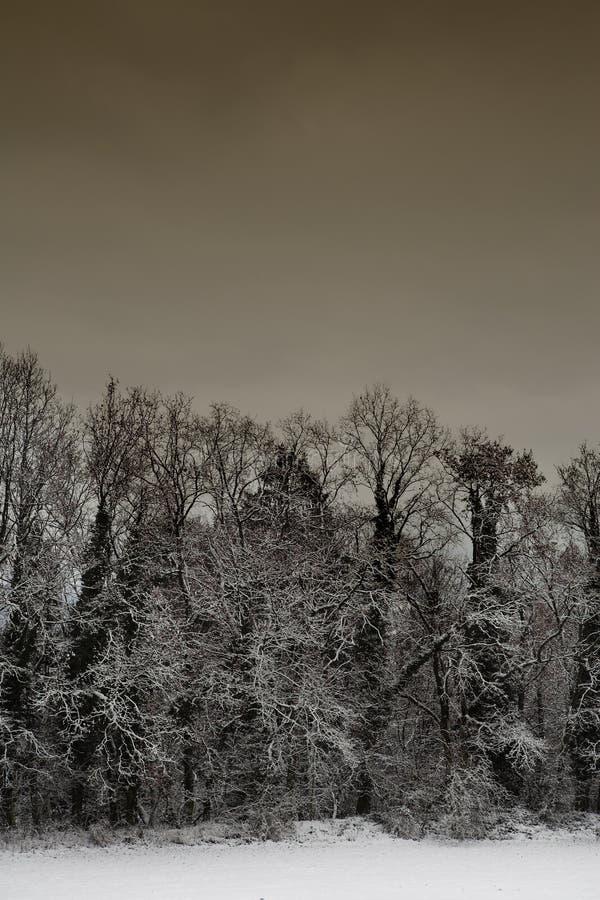 5横向雪 库存照片