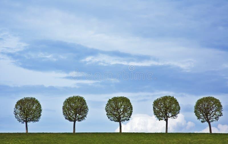 5 árvores imagem de stock royalty free