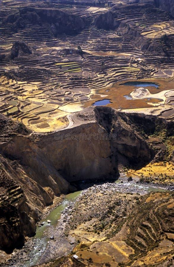 5 кондоров colca самонаводят valey террасы inca стоковая фотография rf