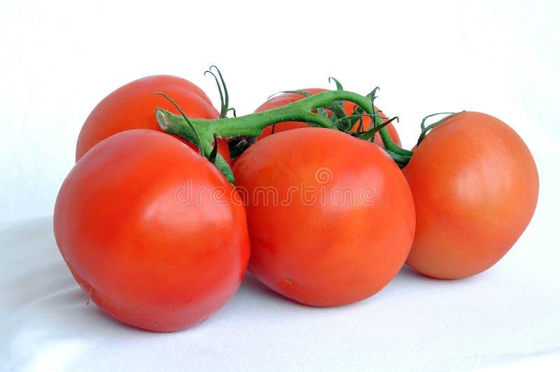 5 томатов стоковая фотография rf