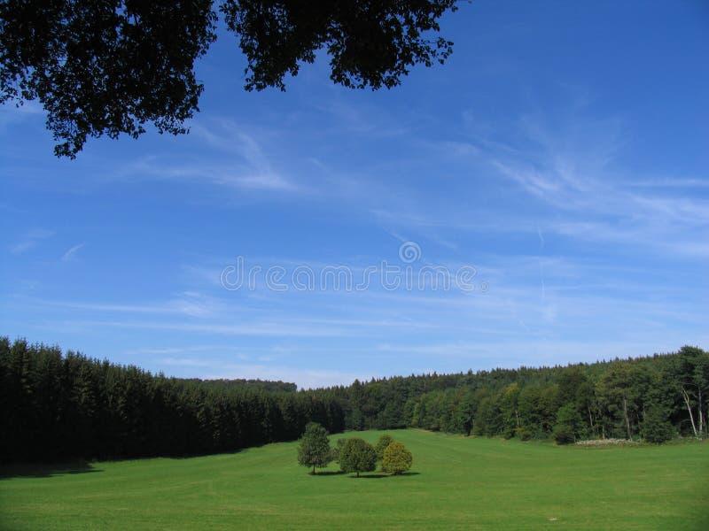 5个森林包围的结构树 库存图片