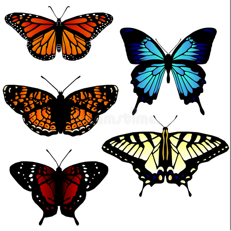 Free 5 Butterfly Illustrations Royalty Free Stock Photos - 3337098