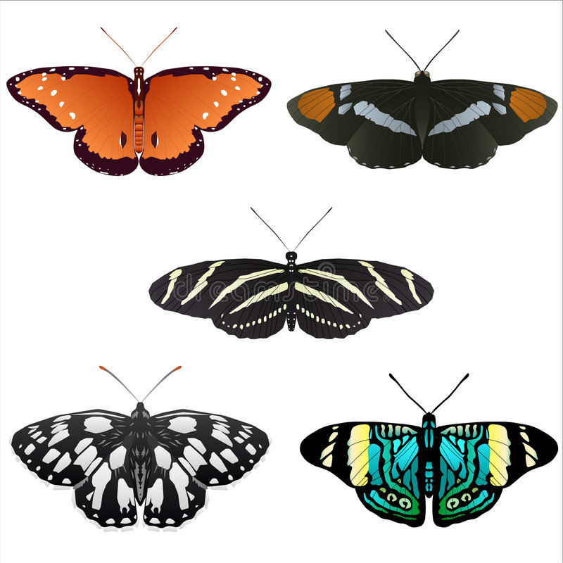5 butterfly illustrations