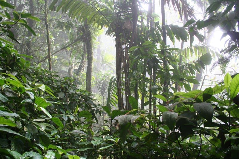 5 cloudforest tropicaux photos stock