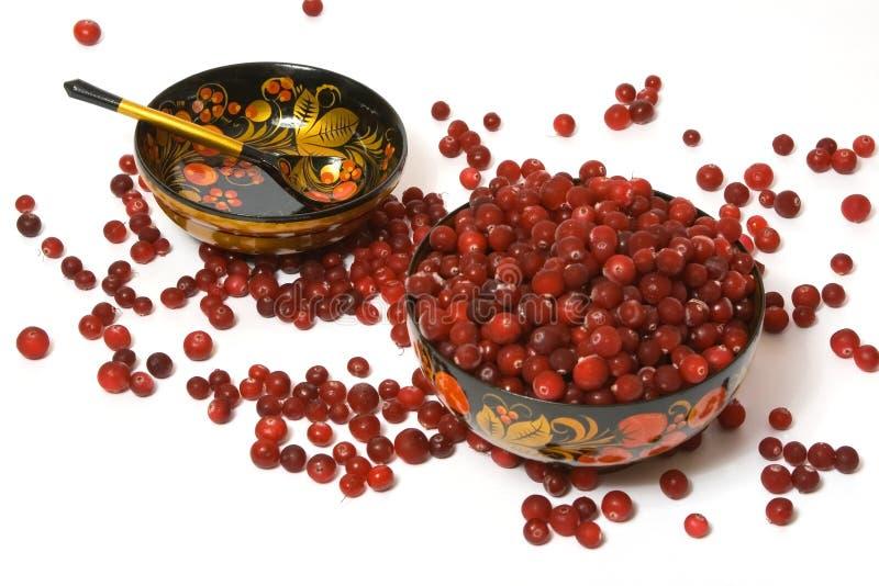 5 cranberries royaltyfria foton