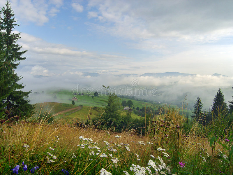 5 górskich łąkowych zdjęcia royalty free