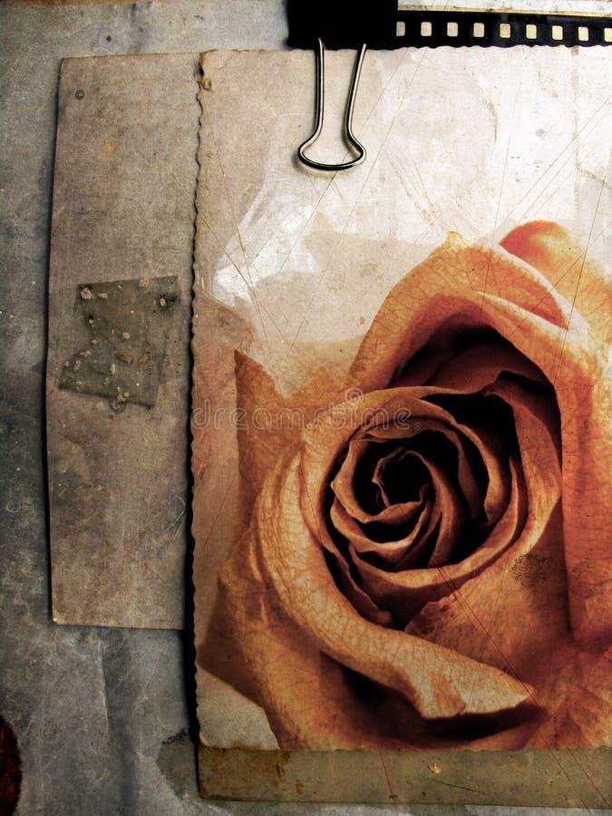 5 grunge karty bez rose royalty ilustracja