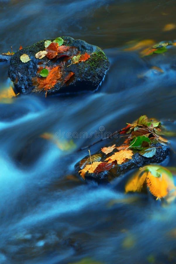 5 jesieni obrazy royalty free
