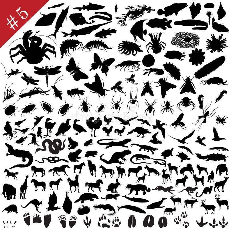 5 set silhouettes för djur vektor illustrationer