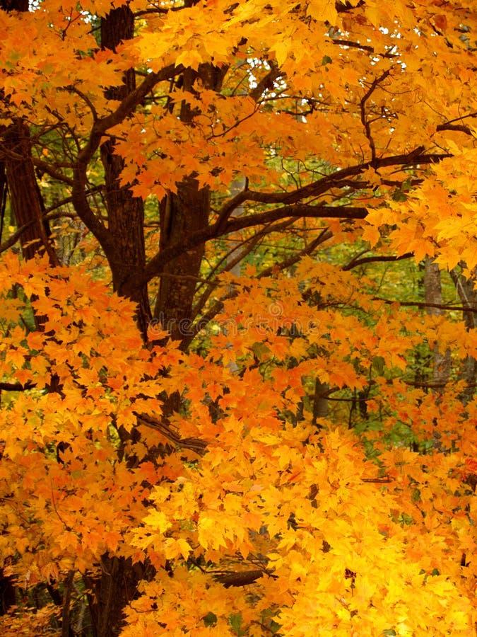 5 szczegółów spadek drzewo fotografia stock