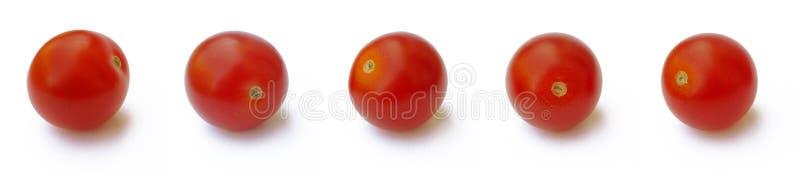 5 tomater royaltyfri fotografi