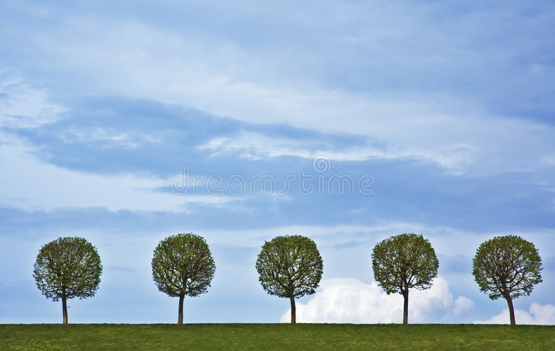 5 trees royaltyfri bild