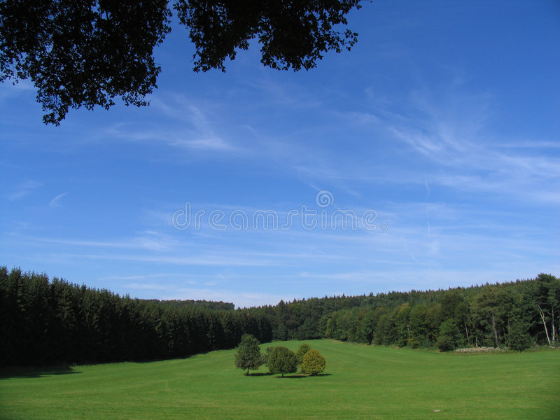 Download 5 Trees Surrounded By Forest Stock Photo - Image: 24544
