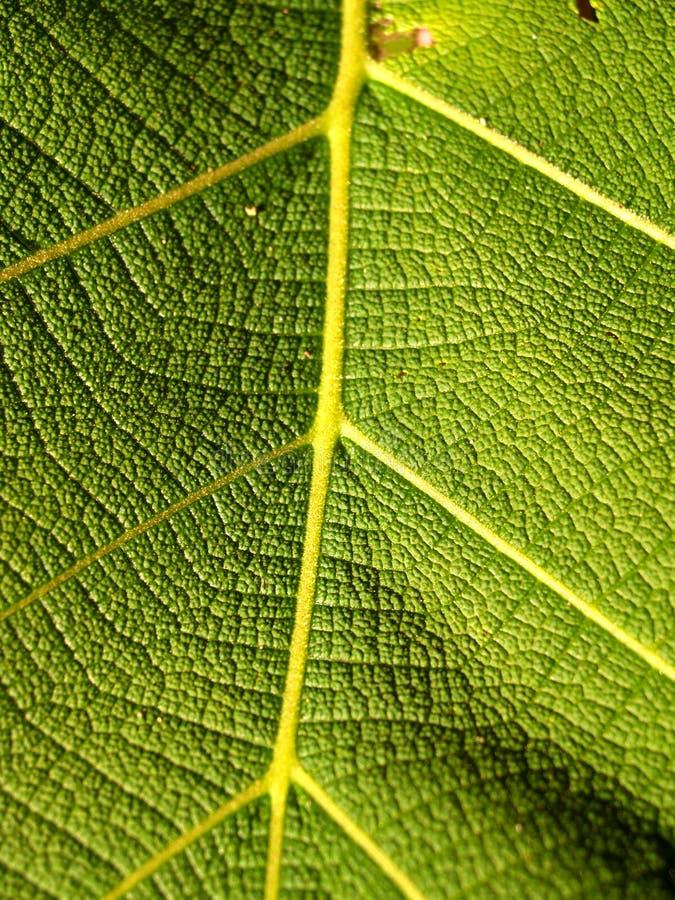 54 zielone liści obraz stock