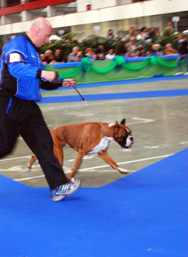 59° International Canine Show royalty free stock images