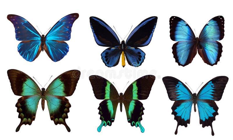 6 błękitny motyli zdjęcia royalty free