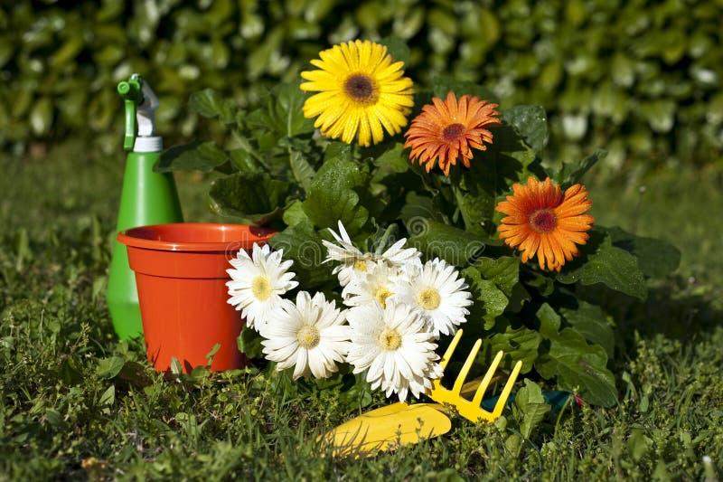 6 blommaträdgårdar arkivfoton