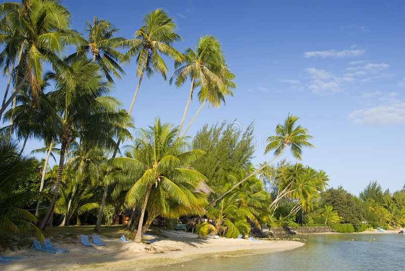 6 sandiga tropiskt för strand arkivbilder