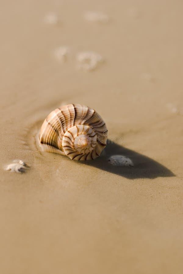 6 seashell zdjęcie stock