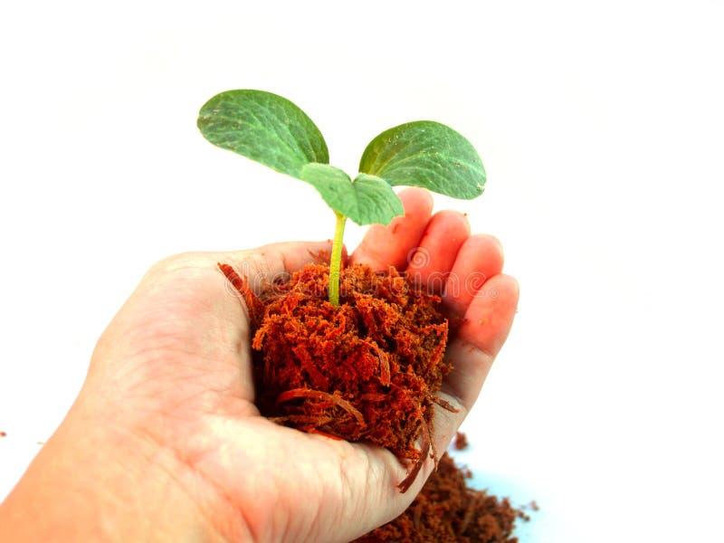 6 smal drzewo zdjęcie royalty free