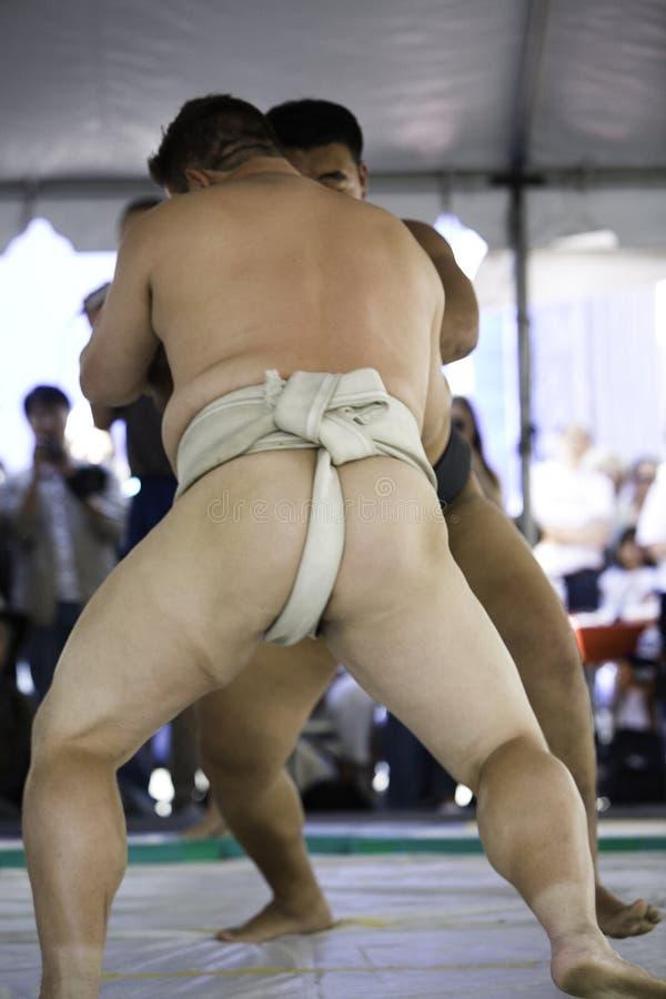 6 sumo 免版税库存照片
