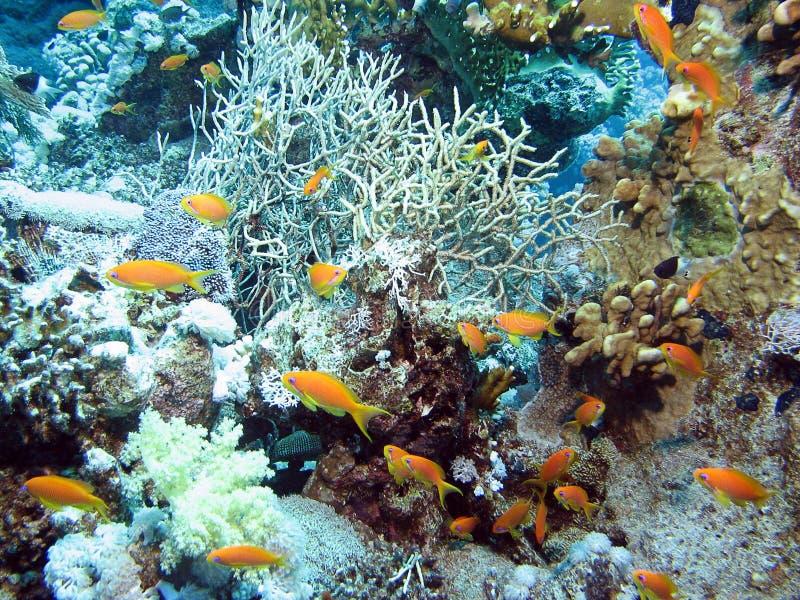 6 underwater fotografia stock