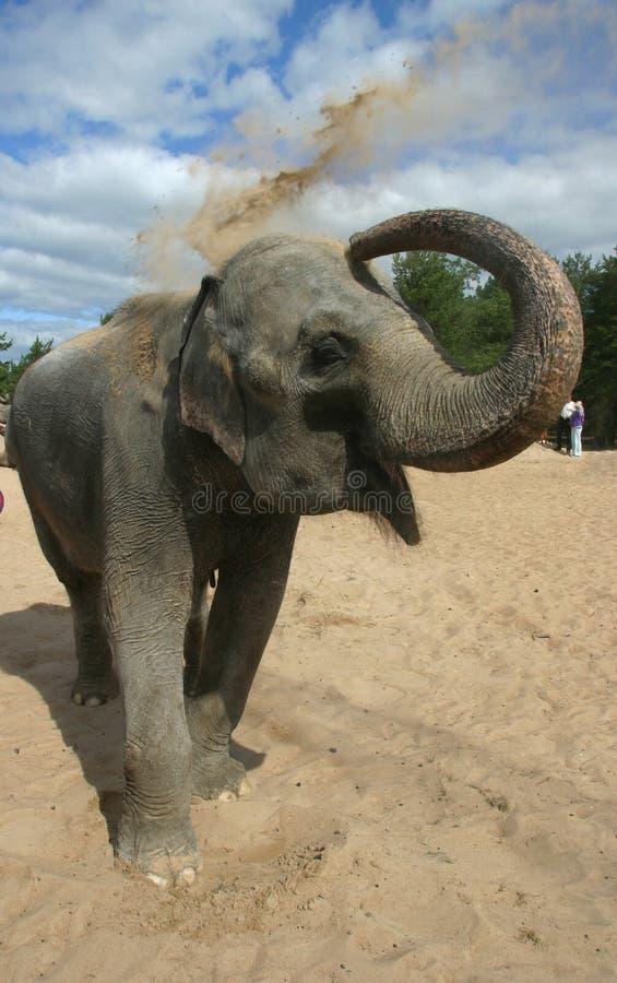 7头沐浴的大象 库存照片