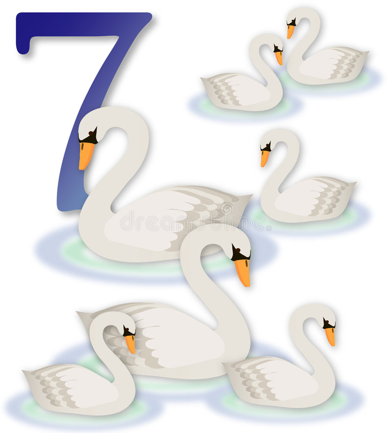 7 12只圣诞节天鹅游泳 库存例证