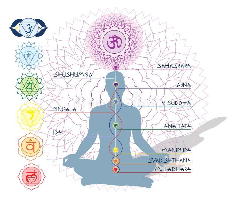 7 Chakras, IDA und pingala lizenzfreie abbildung
