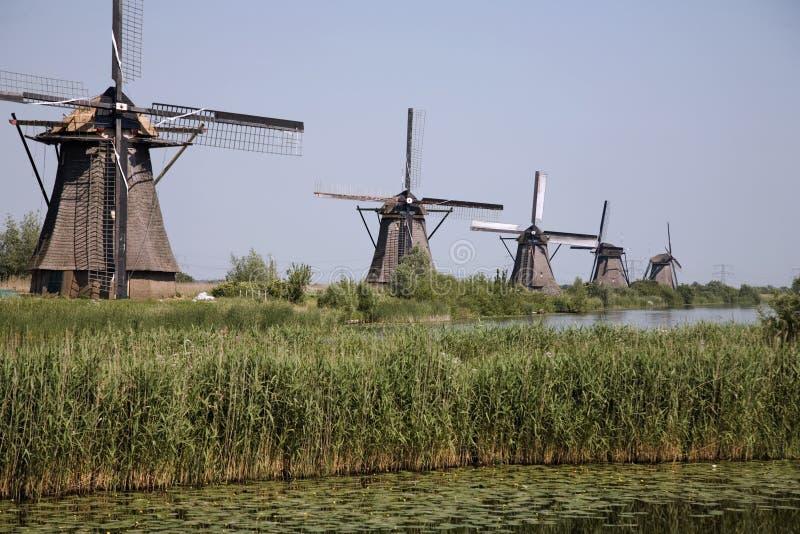 7 holländska kinderdijkwindmills royaltyfri foto