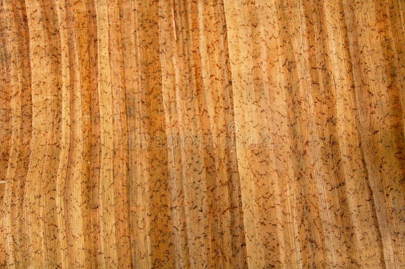 7 papieru wzorzystego drewna zdjęcie royalty free
