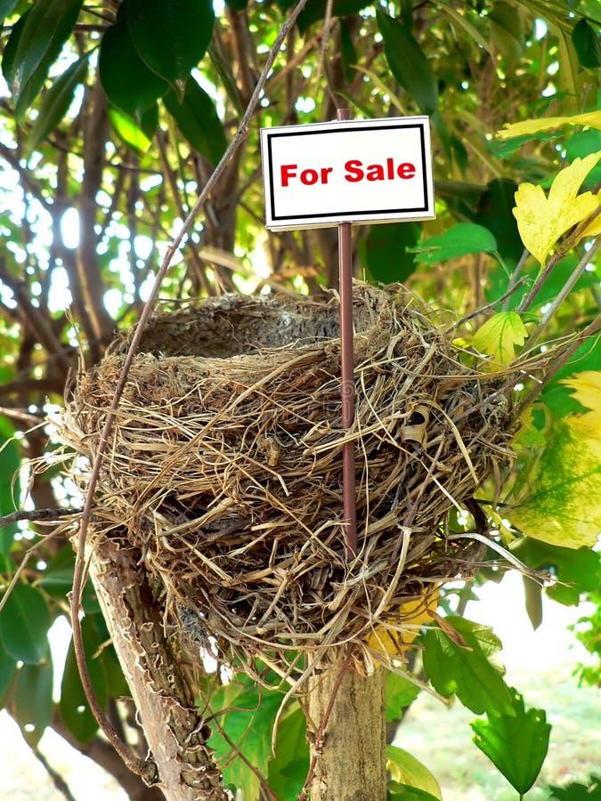 7 ptaków gniazda nieruchomości real zdjęcia stock