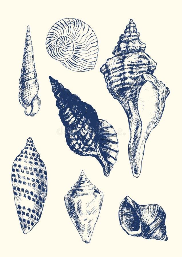 7 various seashells. Collection of 7 hand- drawn seashells stock illustration