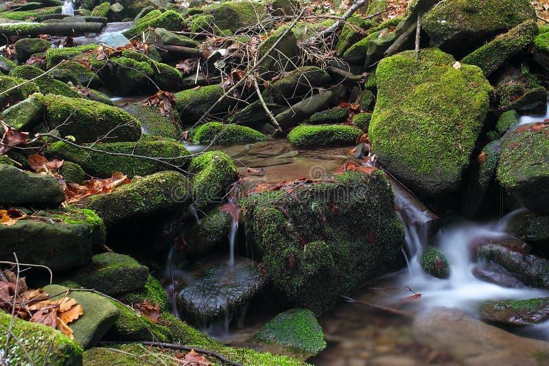 7 wody fotografia stock