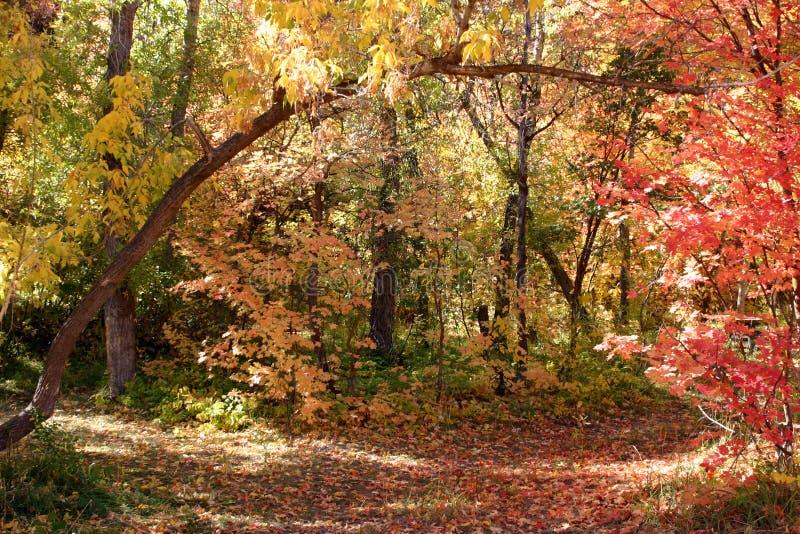 752美好的秋天 库存照片